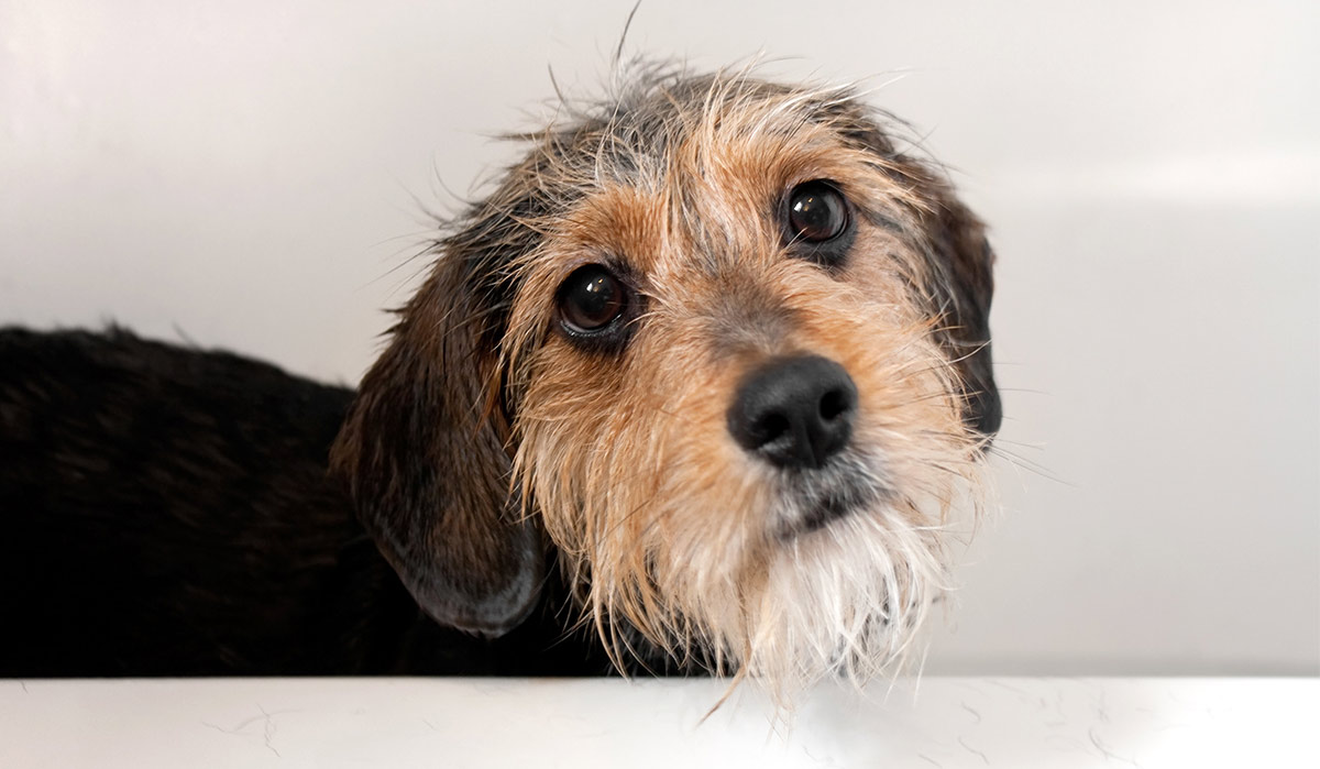 Terrier Mix Pros And Cons Of The Top Terrier Cross Breeds