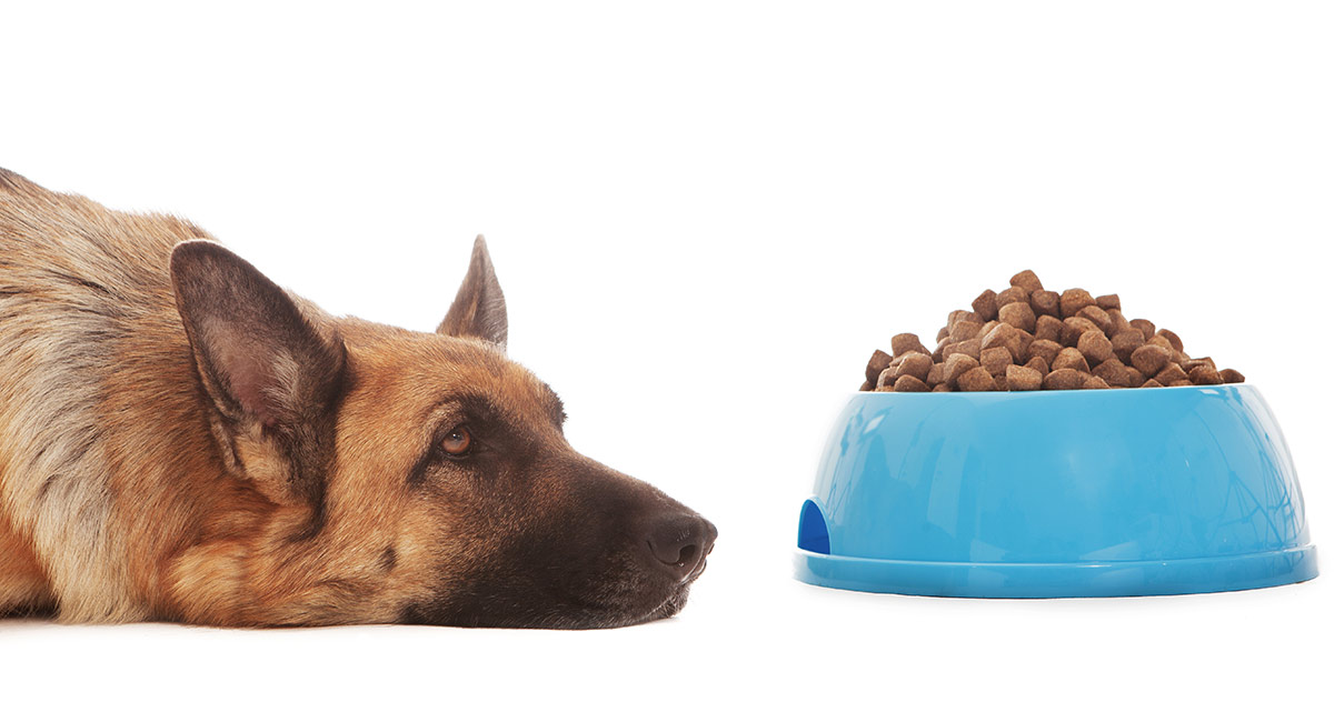 Dog Food For Sensitive Stomach Senior