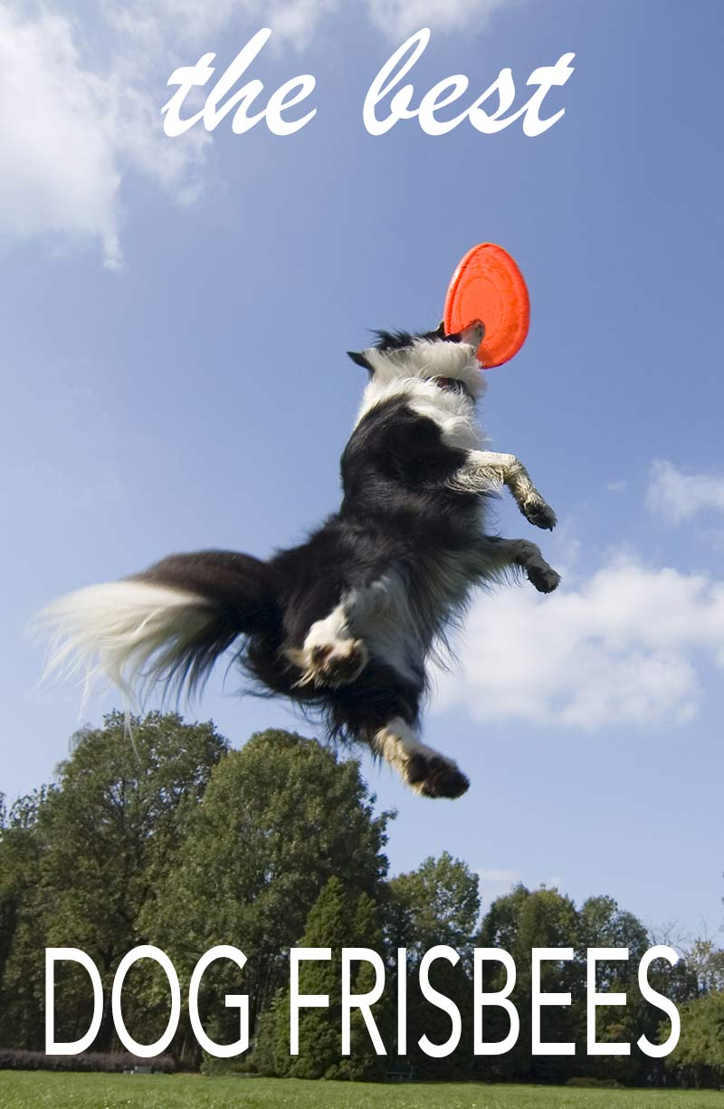 Best dog frisbees - reviews and tips