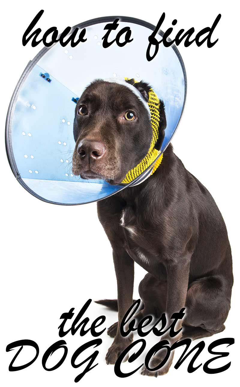 How to pick the best dog cone for your injured pet