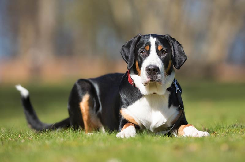Mountain Dog Breeds 10 Amazing Breeds Who Live On Top Of