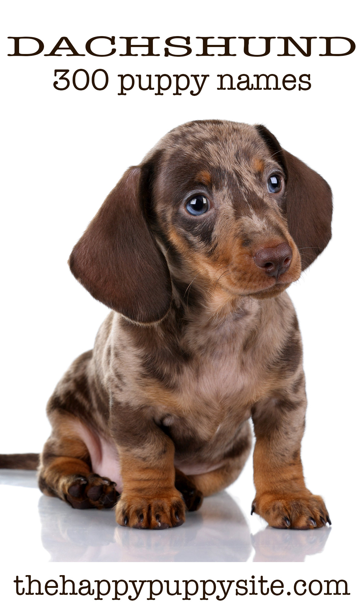 Dachshund Puppy Dog Food