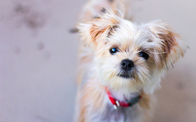 Small Dog Names 350 Ideas For Naming