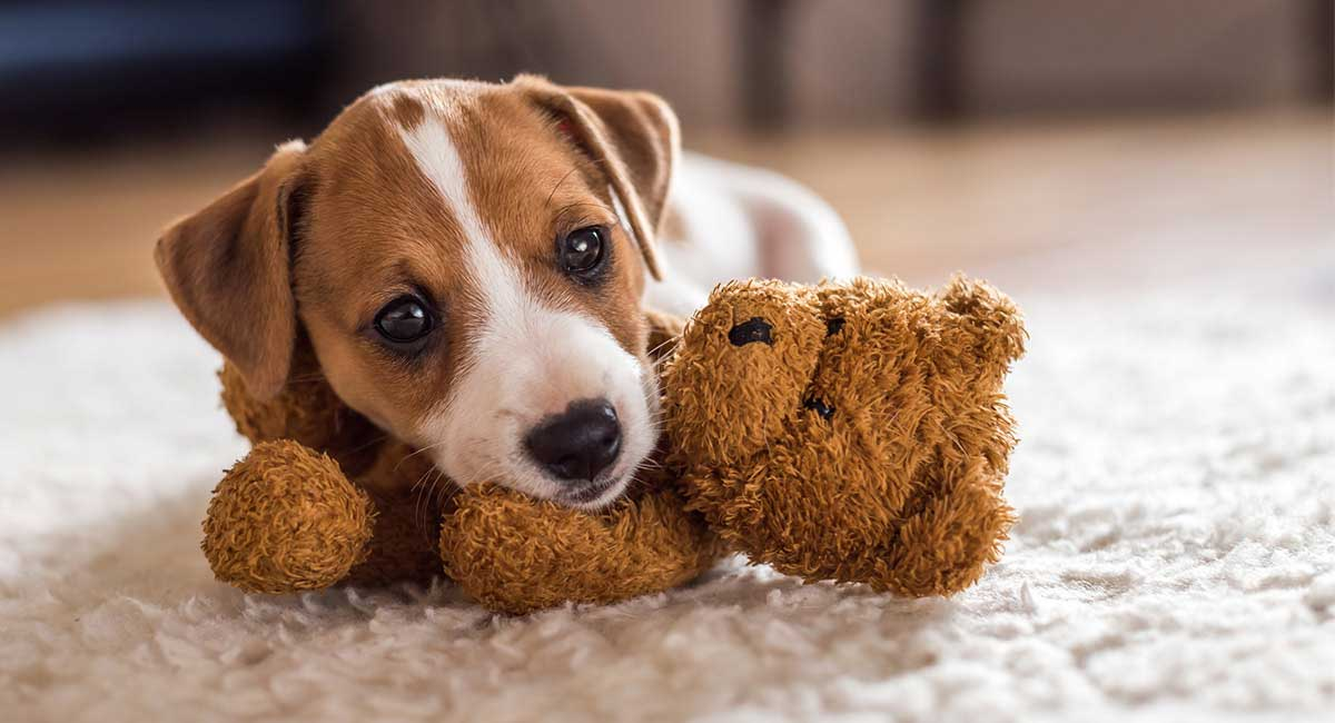 Small Dog Names 350 Ideas For Naming Your Little Puppy