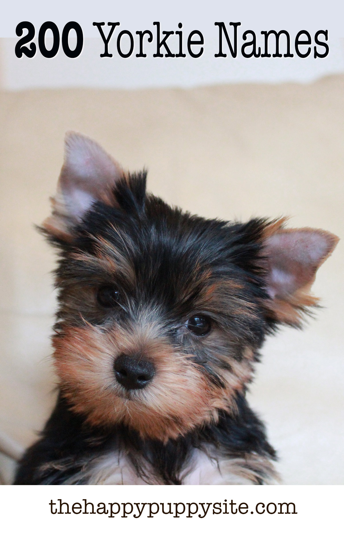 Yorkie Names - 200 Amazing Ideas For Naming Yorkshire Terriers