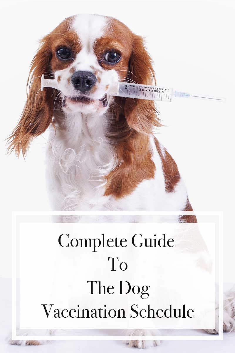Complete Guide To The Dog Vaccination Schedule.