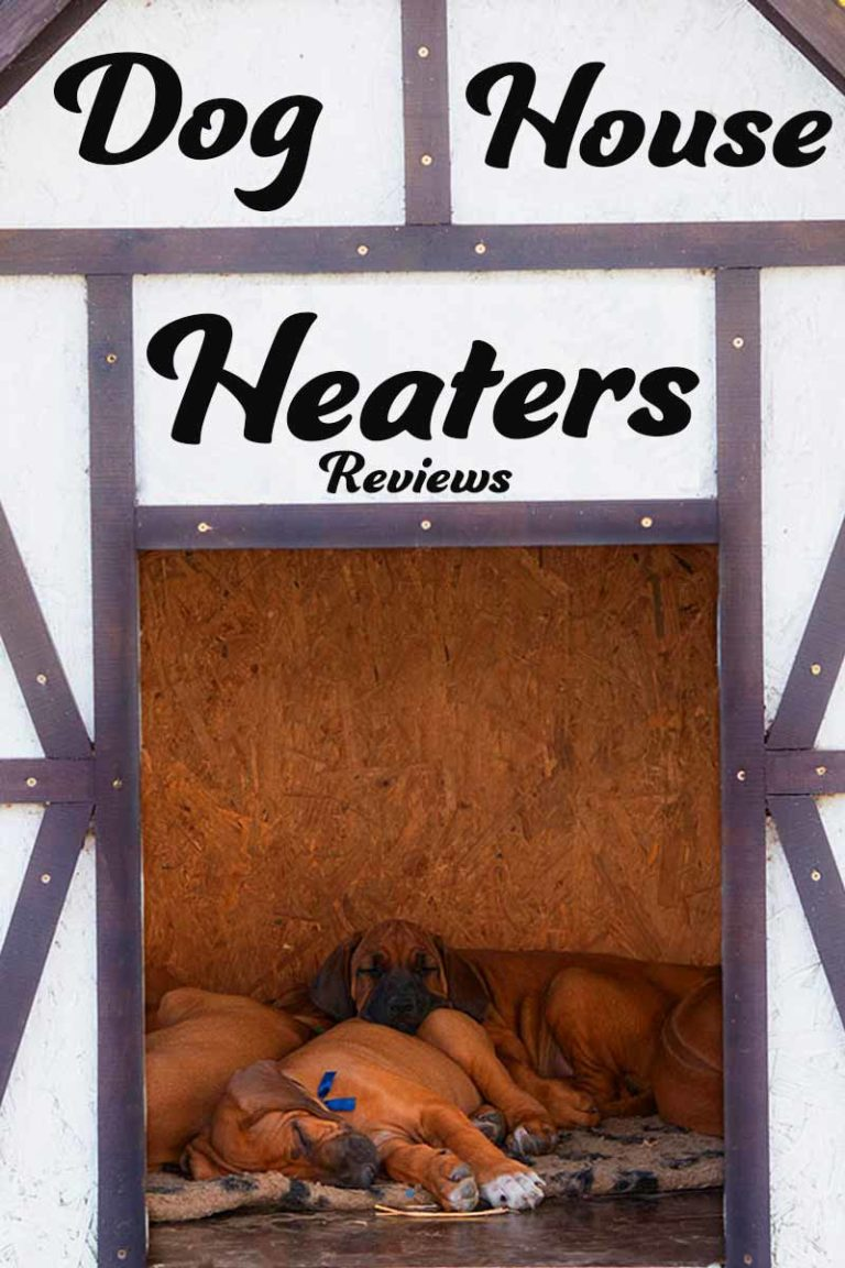 dog eaters Read dogeaters by jessica hagedorn by jessica hagedorn for free with a 30 day free trial read ebook on the web, ipad, iphone and android.