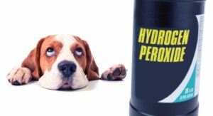 Hydrogen Peroxide For Dogs – What Can I Use It For Safely?