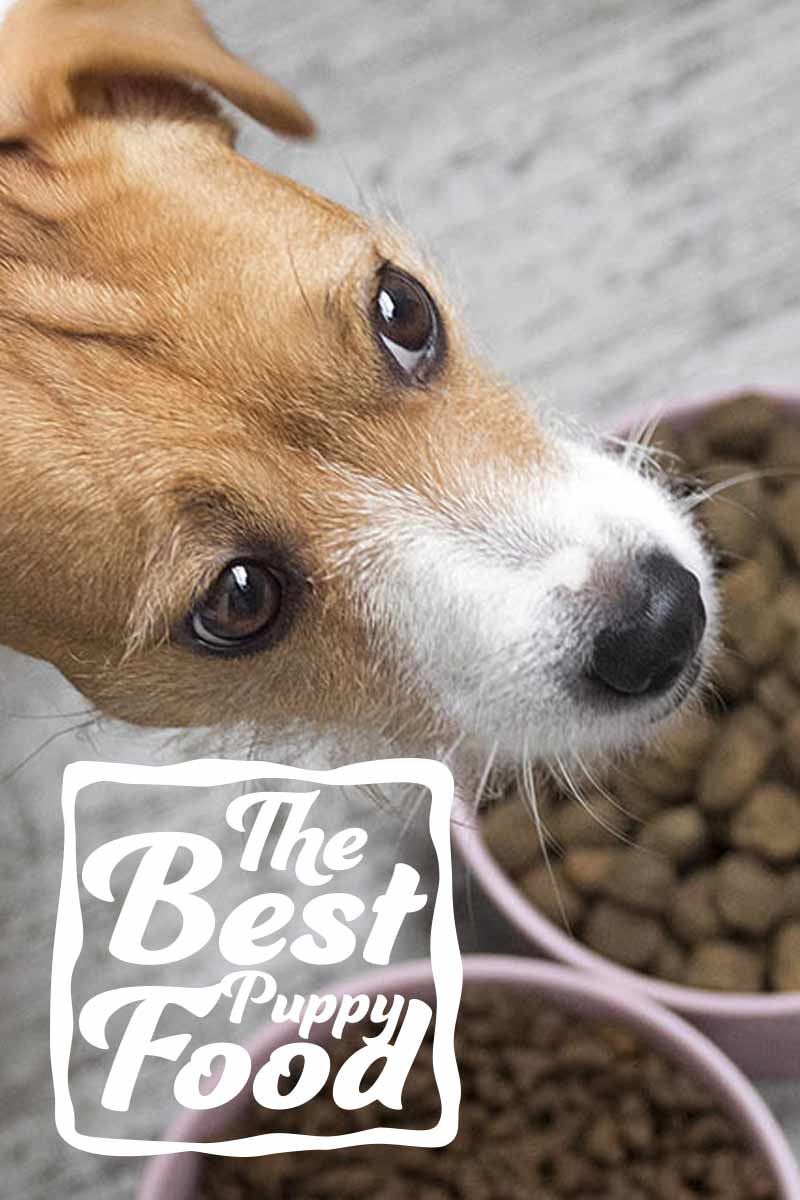 The best puppy food - A dog food guide.