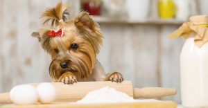 Dog Cupcake Recipes