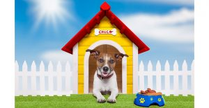 Dog House Heater