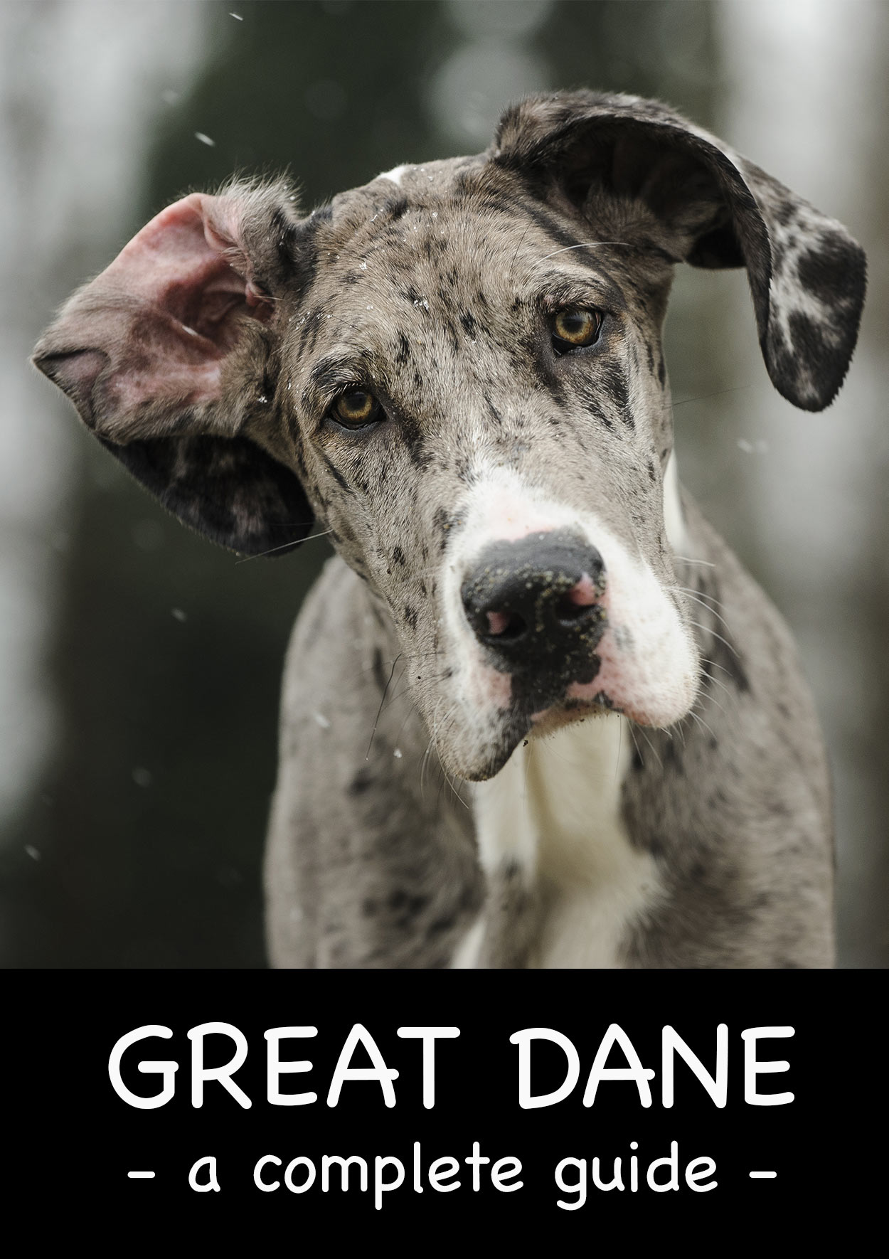 Great Dane Guide