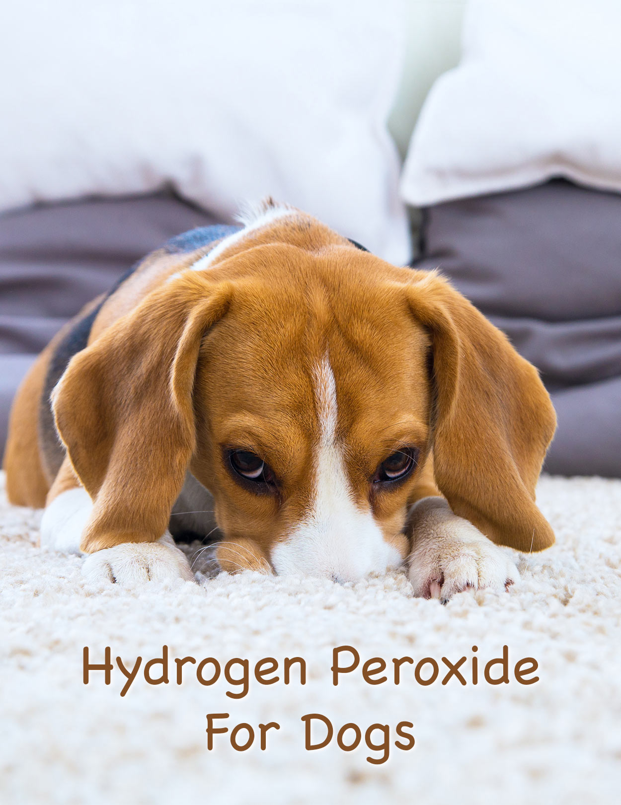Hydrogen Peroxide For Dogs - What Can I Use It For Safely?