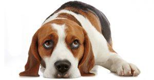 Hydrogen Peroxide For Dogs