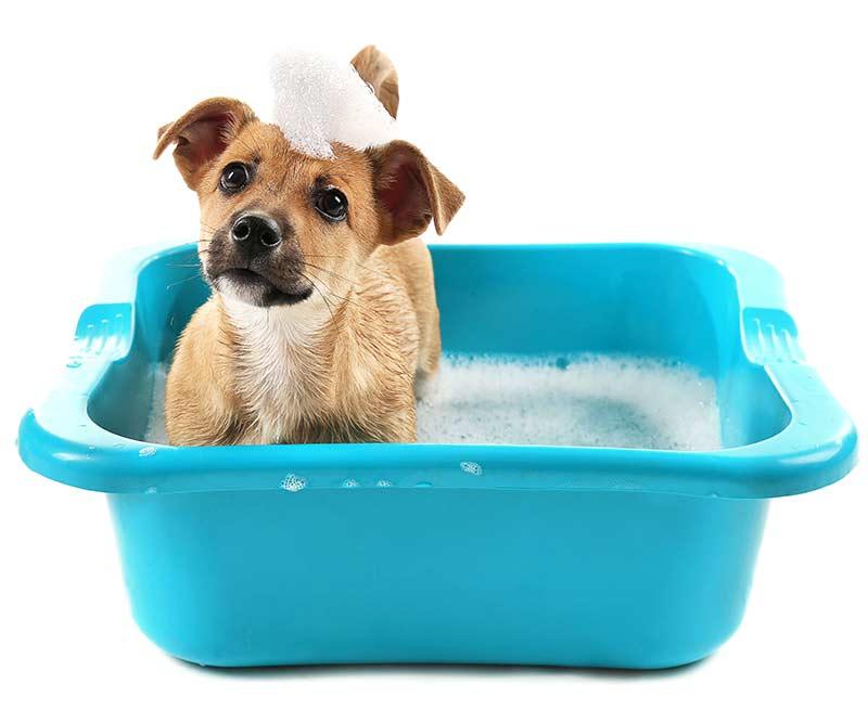 puppy bath in a washing up bowl