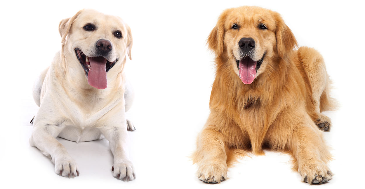 Dog Breeds With Pictures And Price