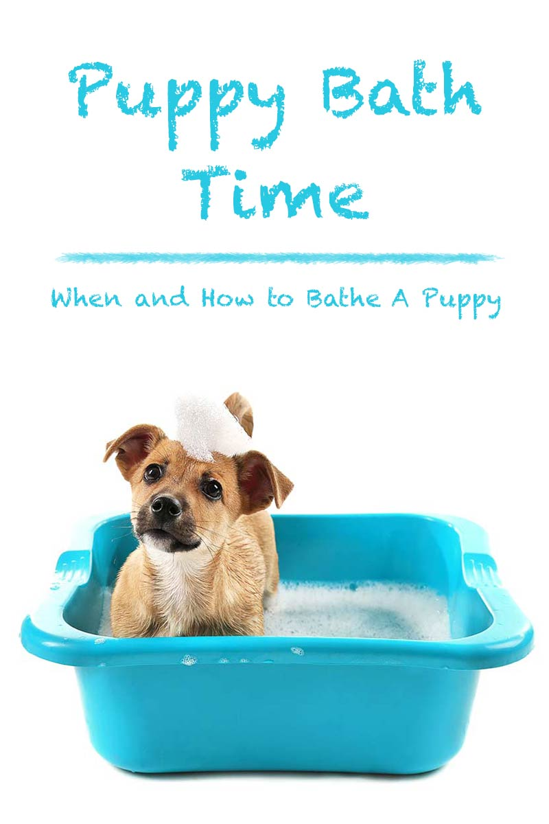 Puppy bath time - When and how to bathe a puppy.