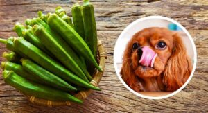 Can Dogs Eat Okra – A Complete Guide To Okra For Dogs