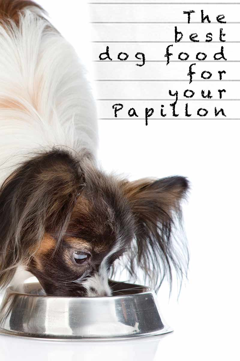The best dog food for your Papillon - Great products for dogs.