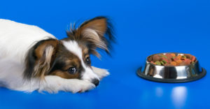 best food for papillon