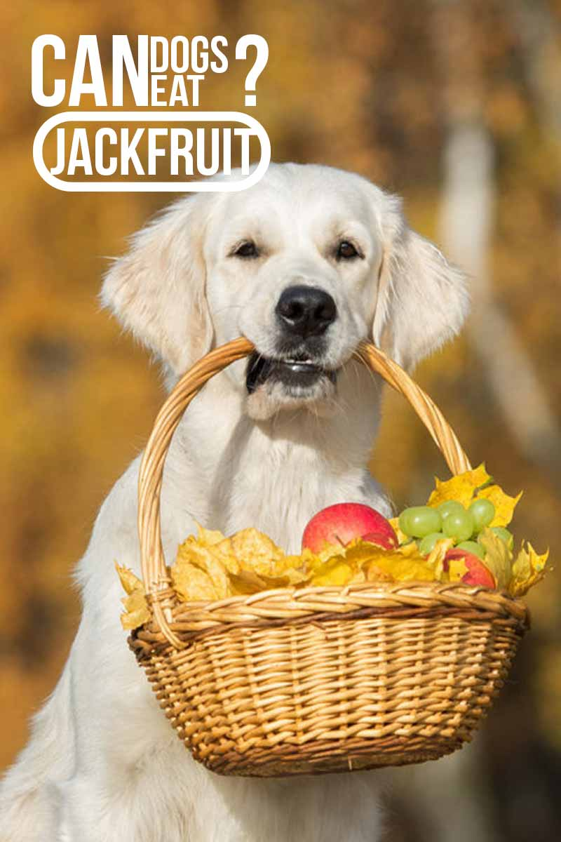 Can dogs eat Jackfruit -  A dog food guide.