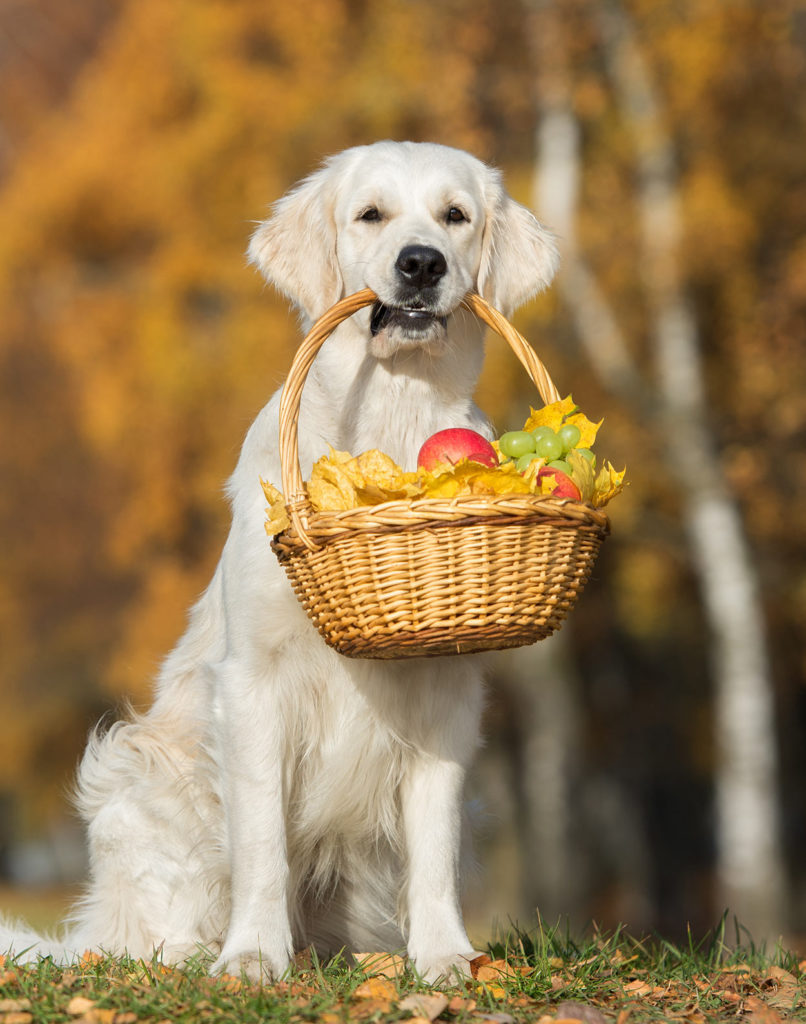 Is Jackfruit Safe for Dogs