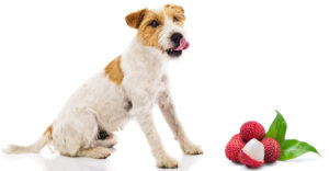 Can Dogs Eat Lychee?