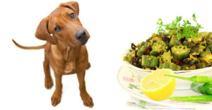 Can Dogs Eat Okra?
