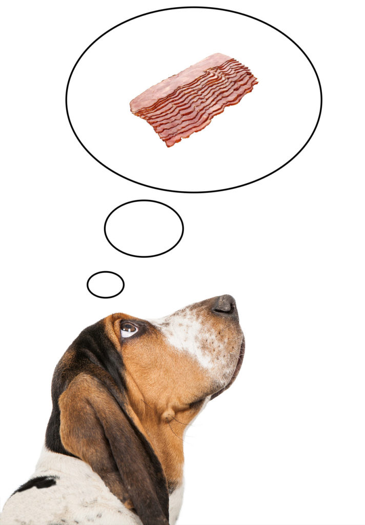 is turkey bacon bad for dogs