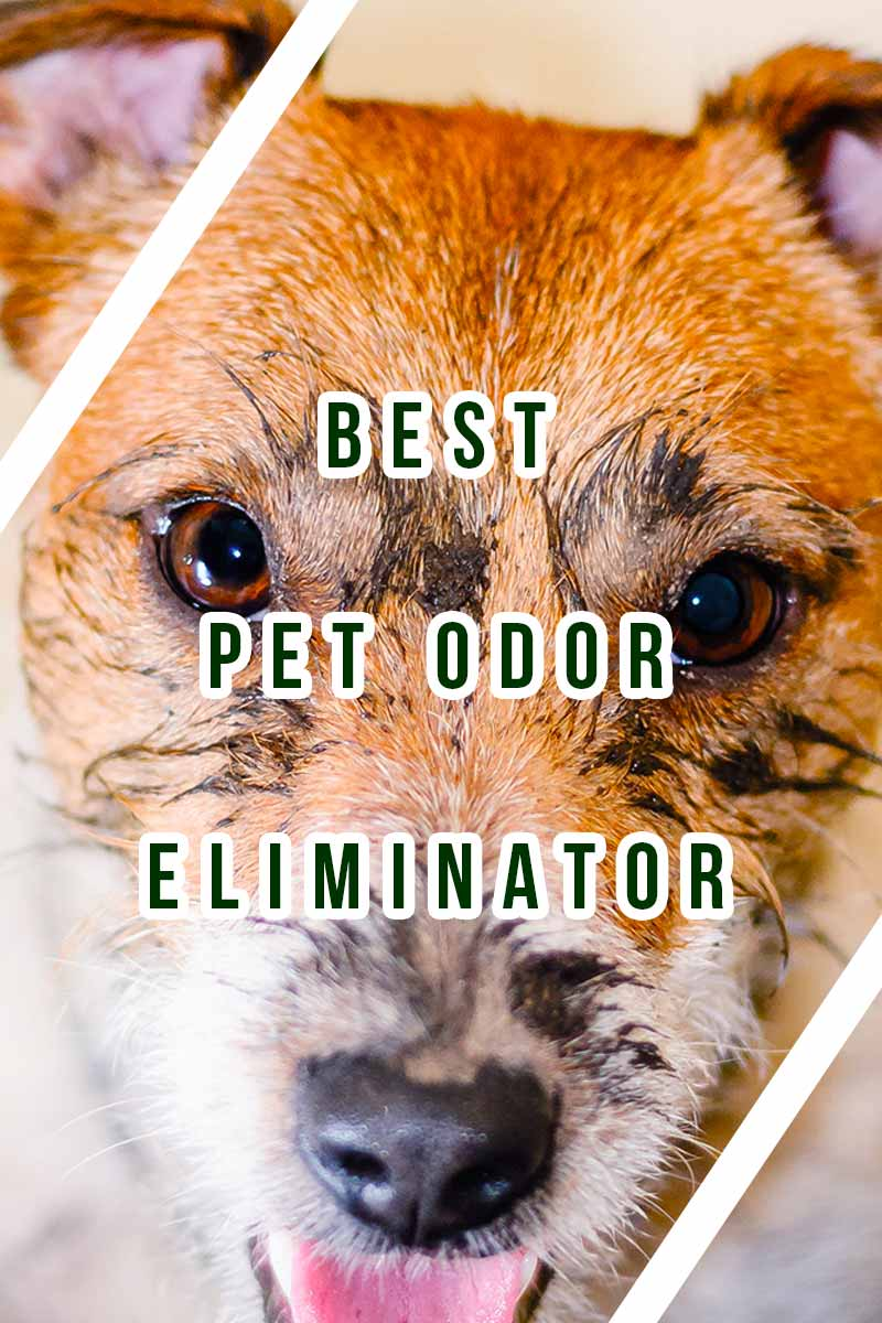 Best Pet Odor Eliminator - Product reviews from TheHappyPuppySite.
