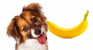 Can Dogs Eat Bananas? A Complete Guide to Bananas for Dogs