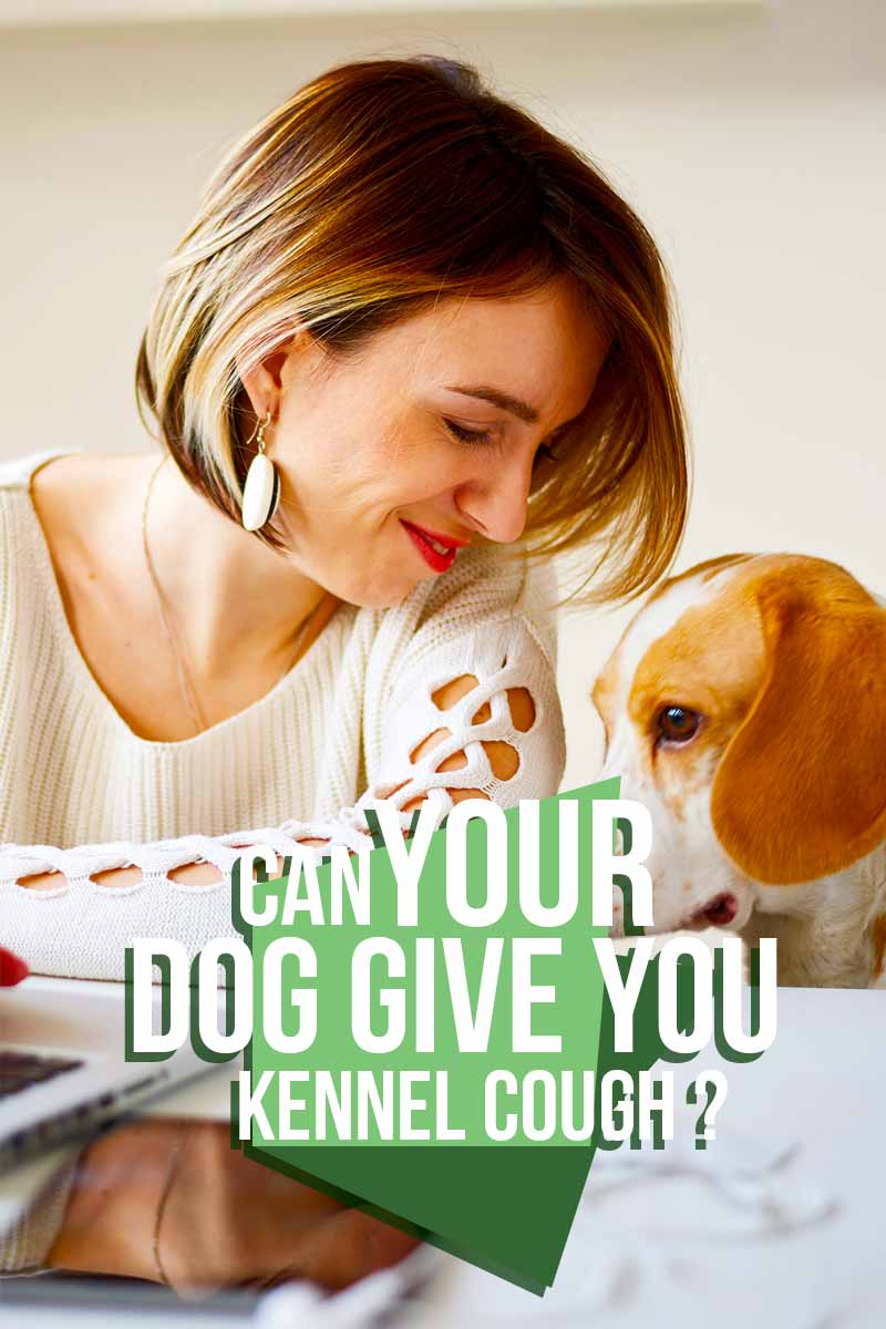 Can your dog give you kennel cough? - A guide to dog health and care from The Happy Puppy Site.