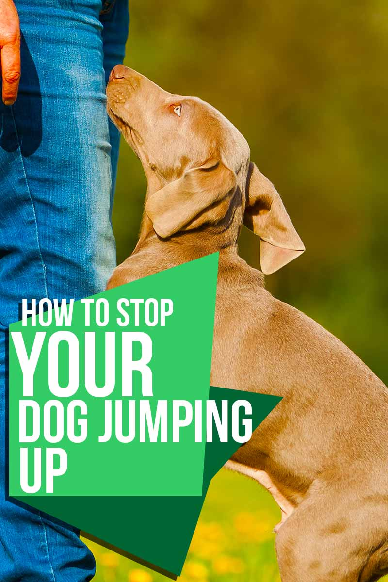 How to stop your dog jumping up - Training tips from The Happy Puppy Site.