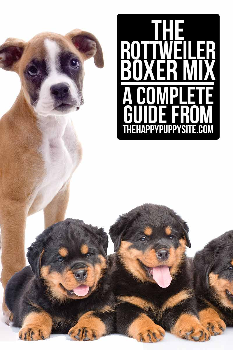 The Rottweiler Boxer Mix - A Complete Guide from TheHappyPuppySite.com