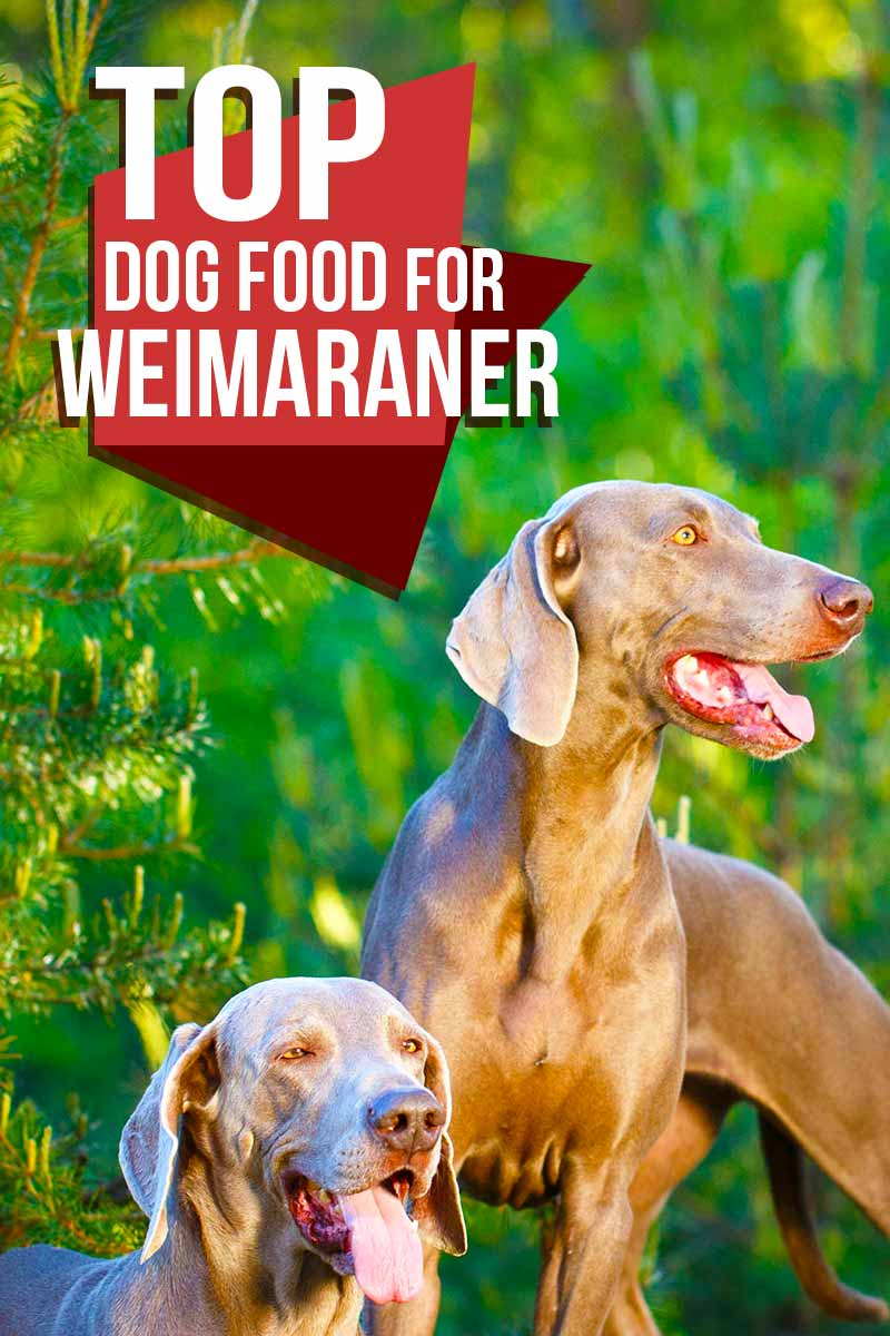 The top dog foods for Weimaraners - Dog food reviews from The Happy Puppy Site.
