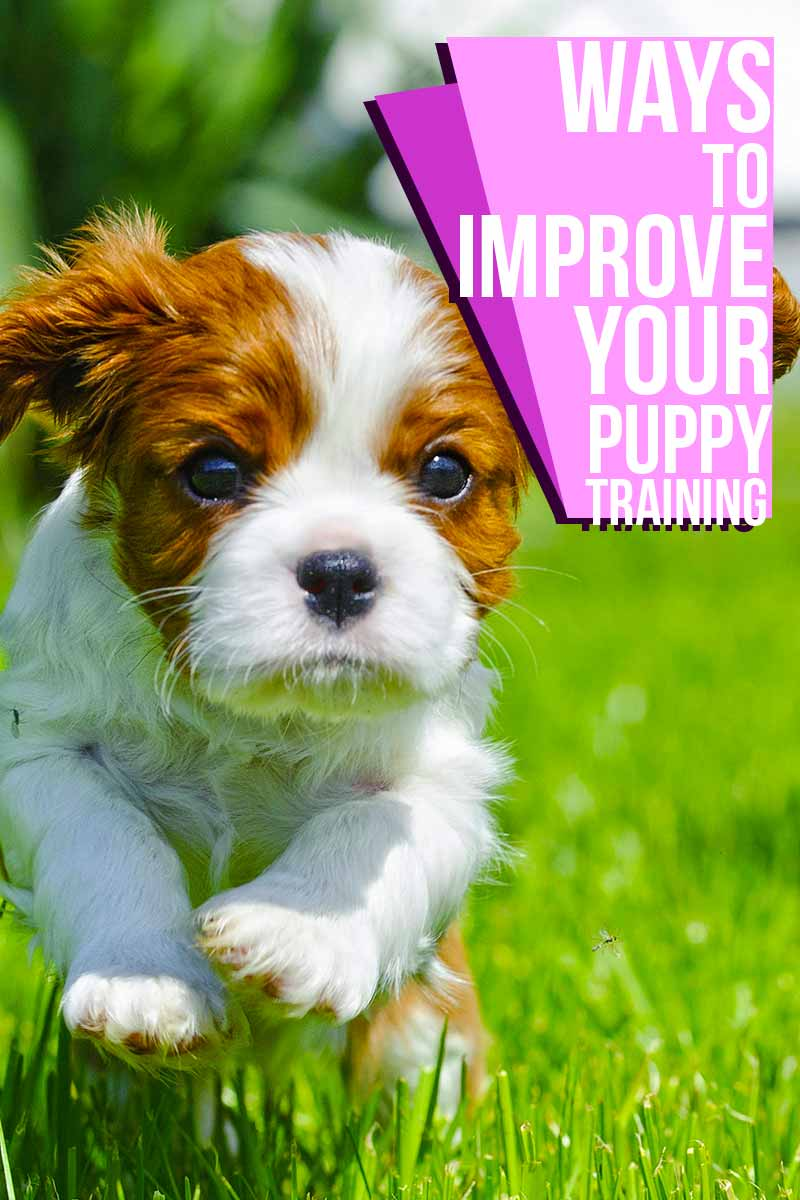 Ways to improve your puppy training - Helpful training advice from The Happy Puppy Site.