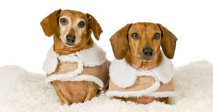 Small Dog Coats: The Best Dressed Petite Pooches