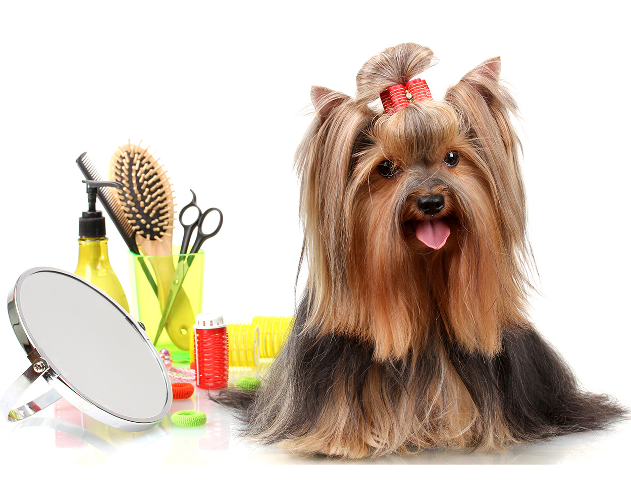 yorkie grooming, long haired dogs