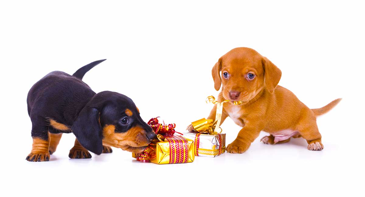 72ae956585 Finding the perfect Dachshund gifts for sausage dog lovers can be tricky.  They are unique dogs with big personalities, and it can be difficult to  find the ...