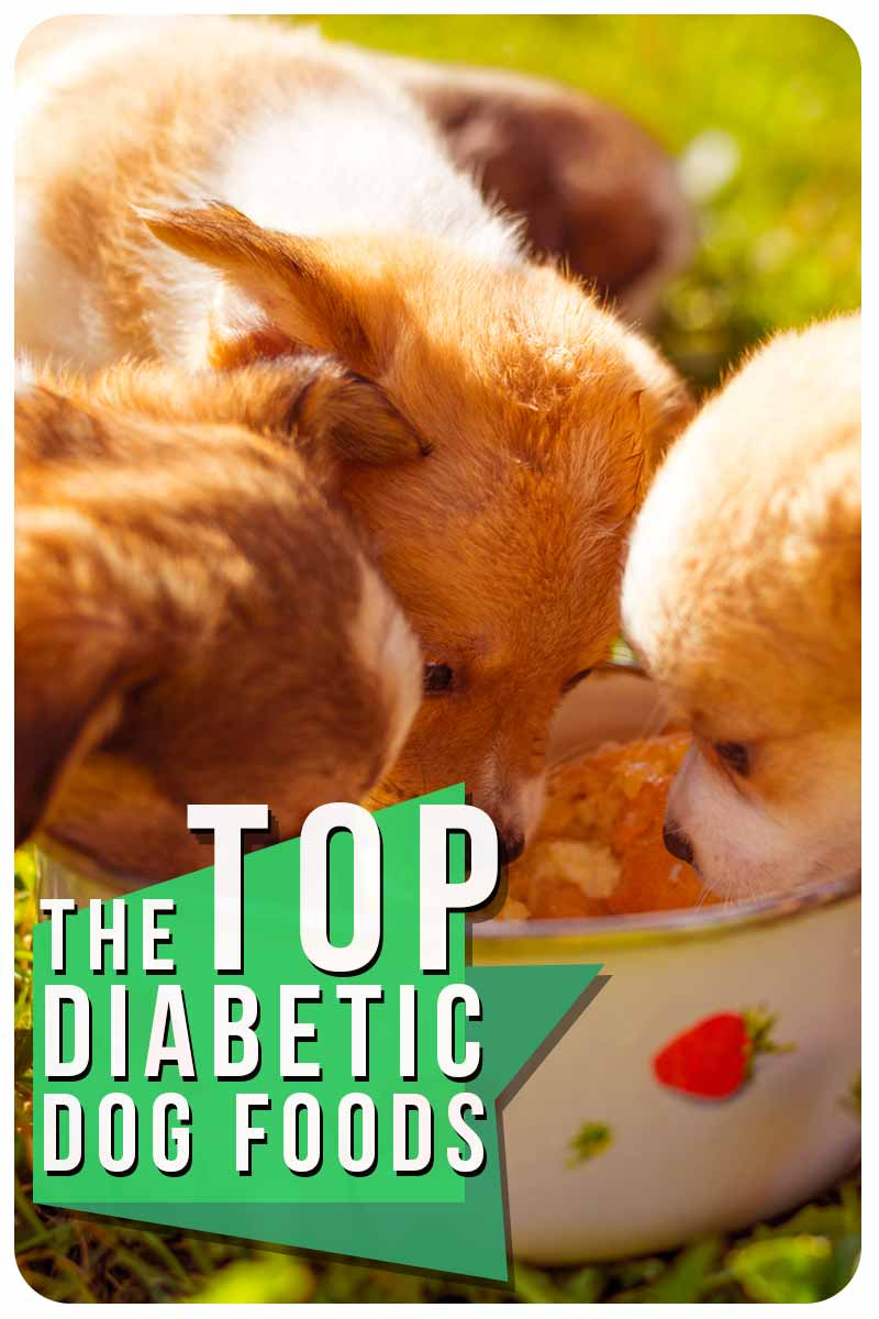 TheTop Diabetic Dog Foods - Dog food reviews and advice.