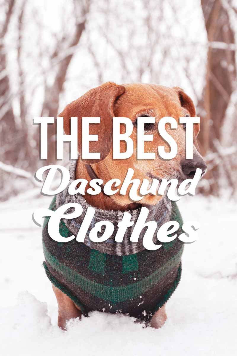 The best Daschund clothes - Great products for dog parents from The Happy Puppy Site.