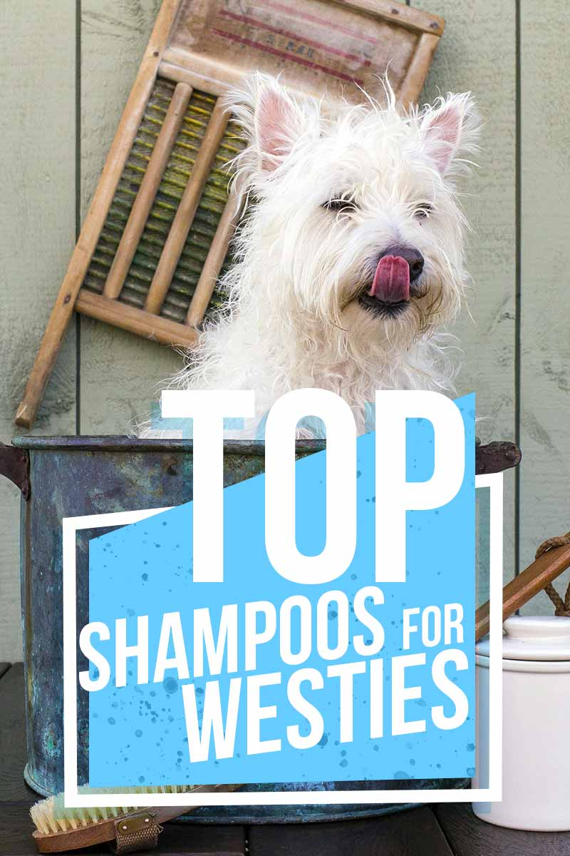 Top shampoos for Westies - Great product reviews from The Happy Puppy Site.