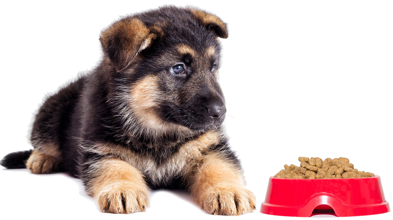 best food for german shepherd puppies