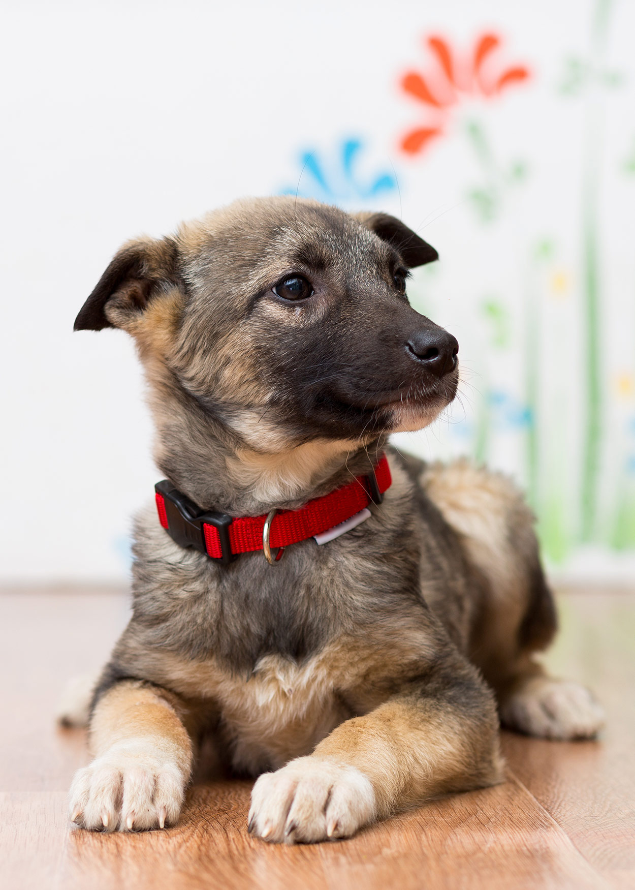 Betere Choosing The Best Puppy Collars For Different Breeds And Sizes MG-62