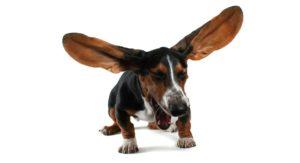 reverse sneezing in dogs