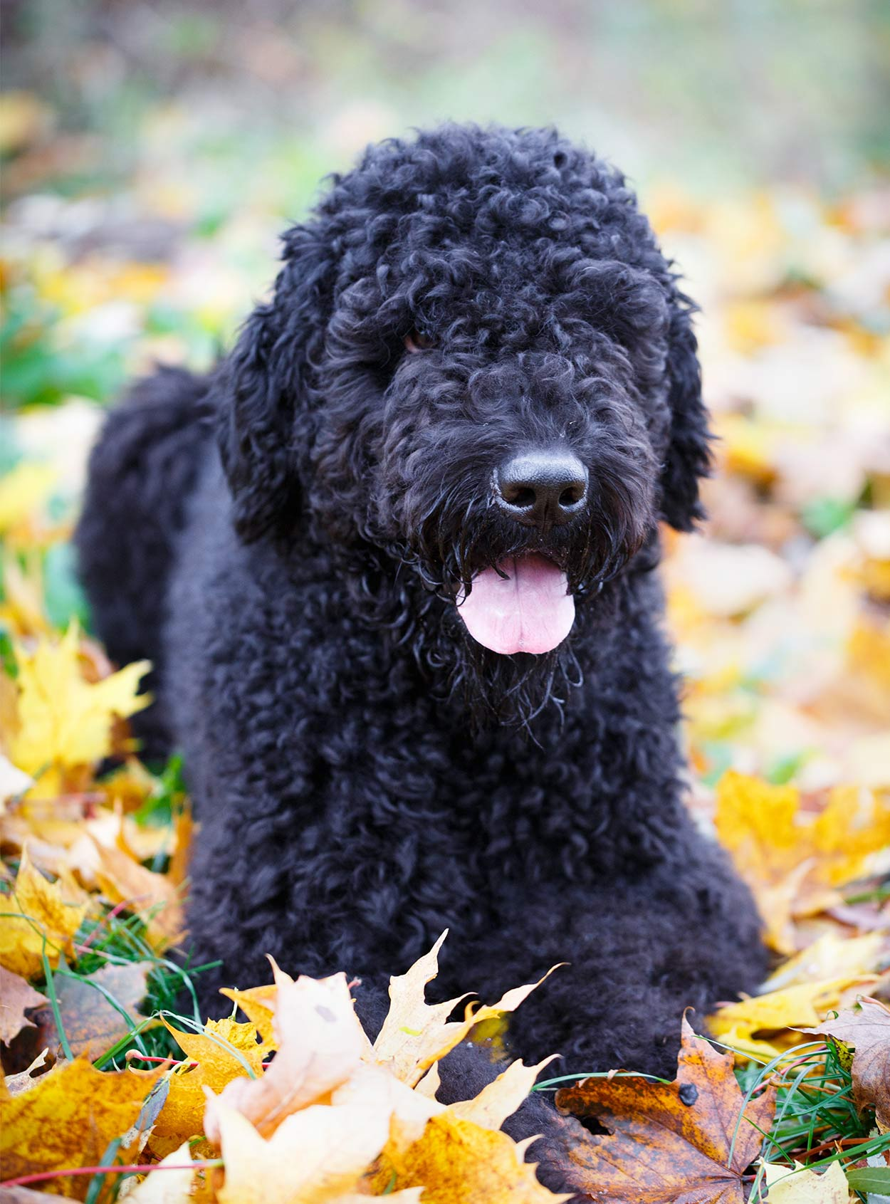 Russian Dog Breeds - The Amazing Pups That Came From Russia