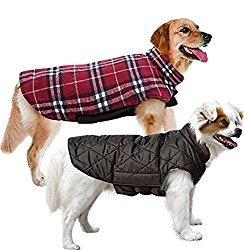small dog coats