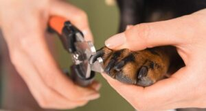 How to Stop A Dog's Nail from Bleeding Quickly And Safely
