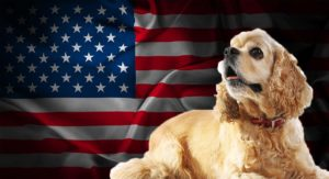 American Dog Breeds – Ten Of Our Top Dog Breeds From The USA