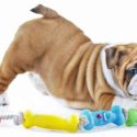 Best Toys For English Bulldogs